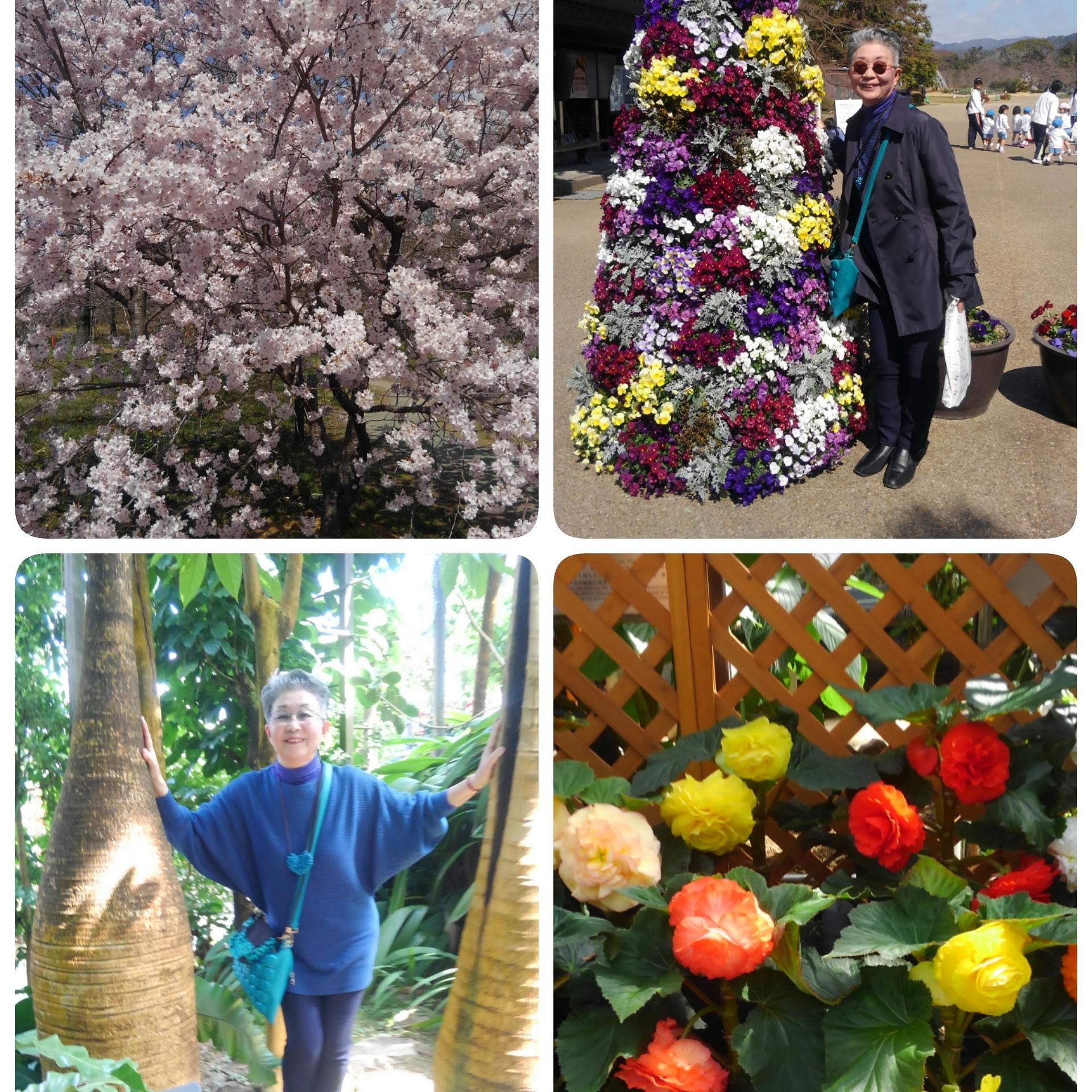 春の陽気に誘われて「京都府立植物園」に行きました🌸🌿🌸