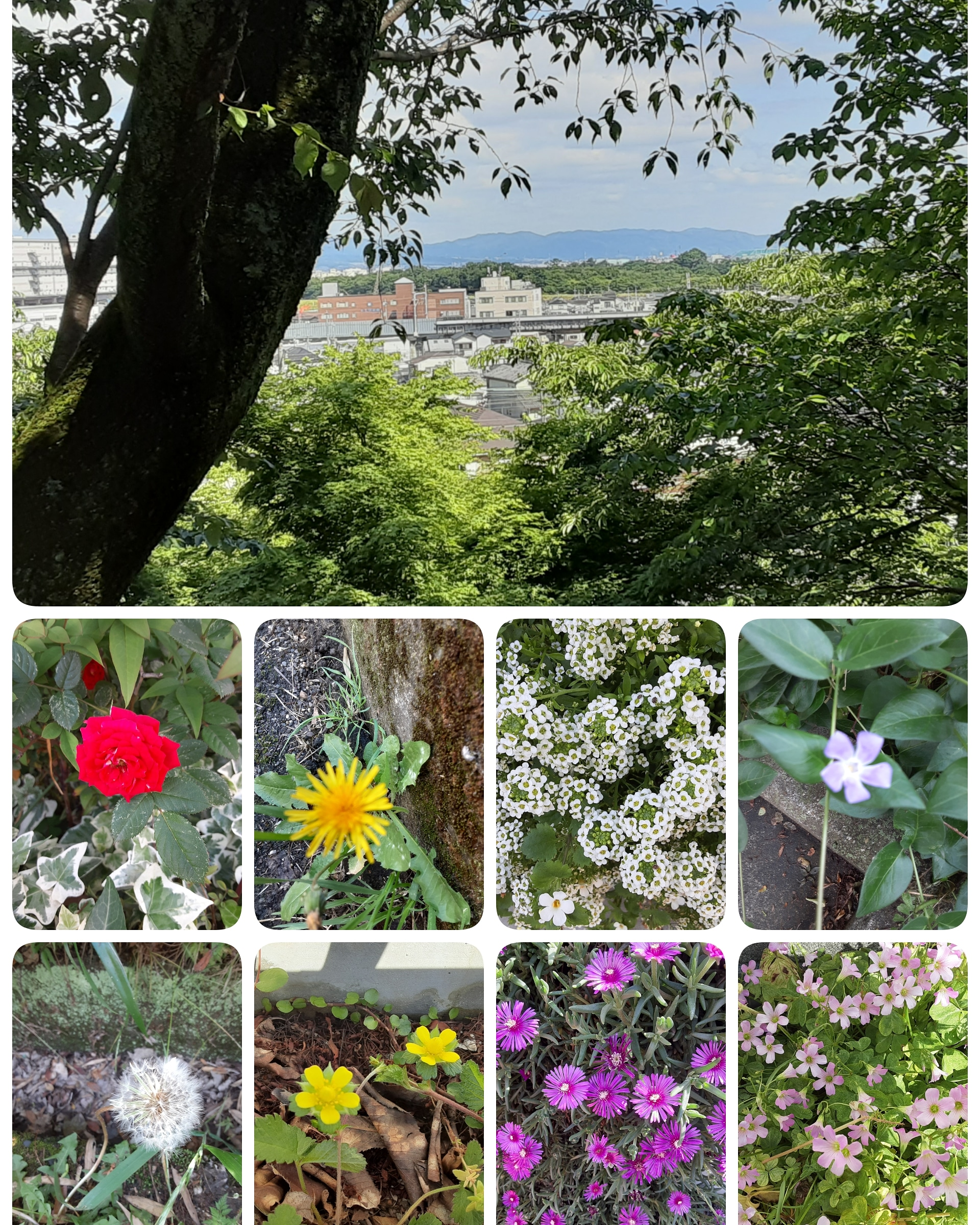 お散歩シリーズ🚶🚶今日は「可憐な花🌱」を見つけて諭して頂きましたよ🍀