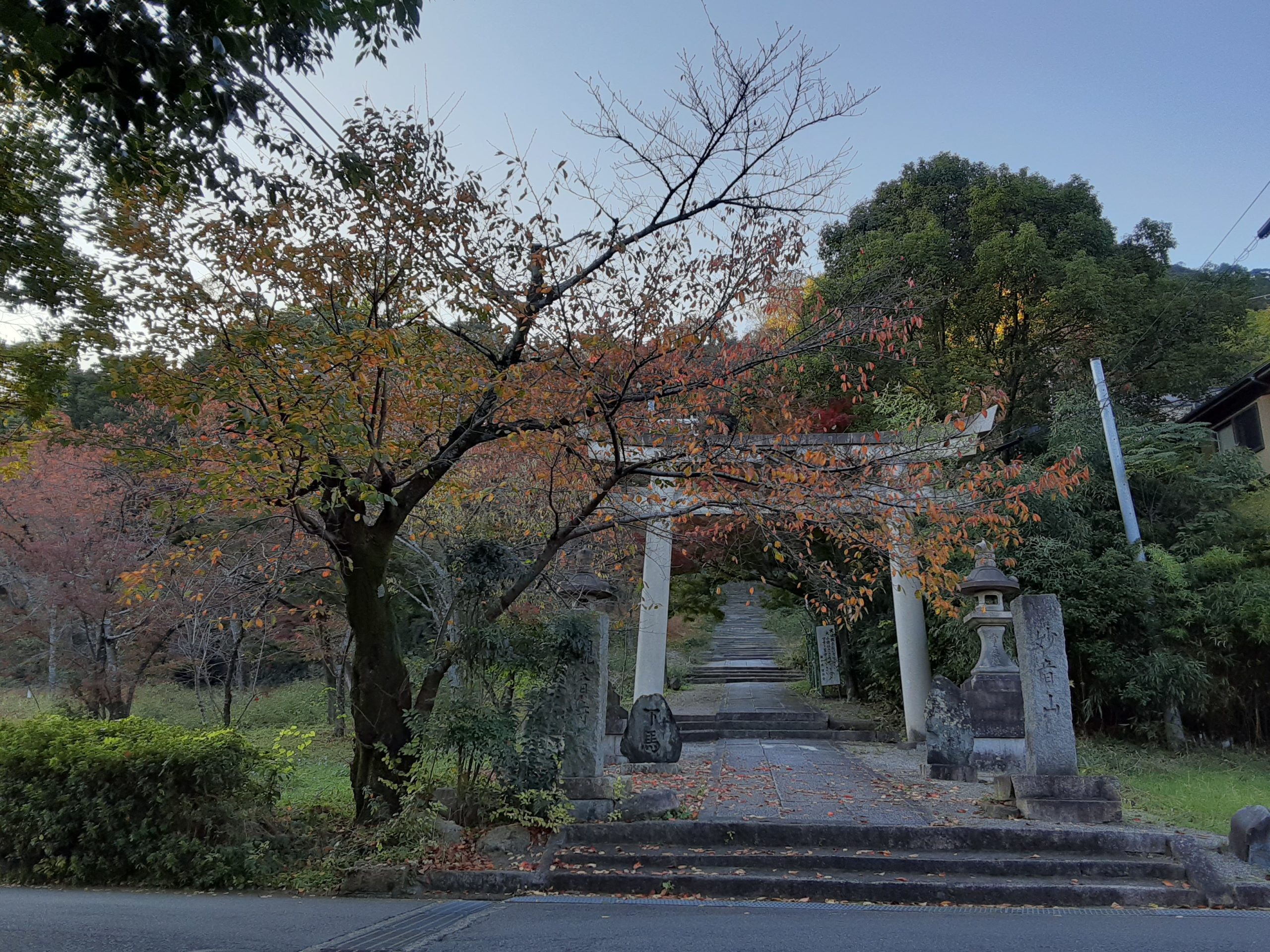 わが街、大山崎町はステキ発見ができるステキな散歩道です~🌟🍁🍂🌿🌟