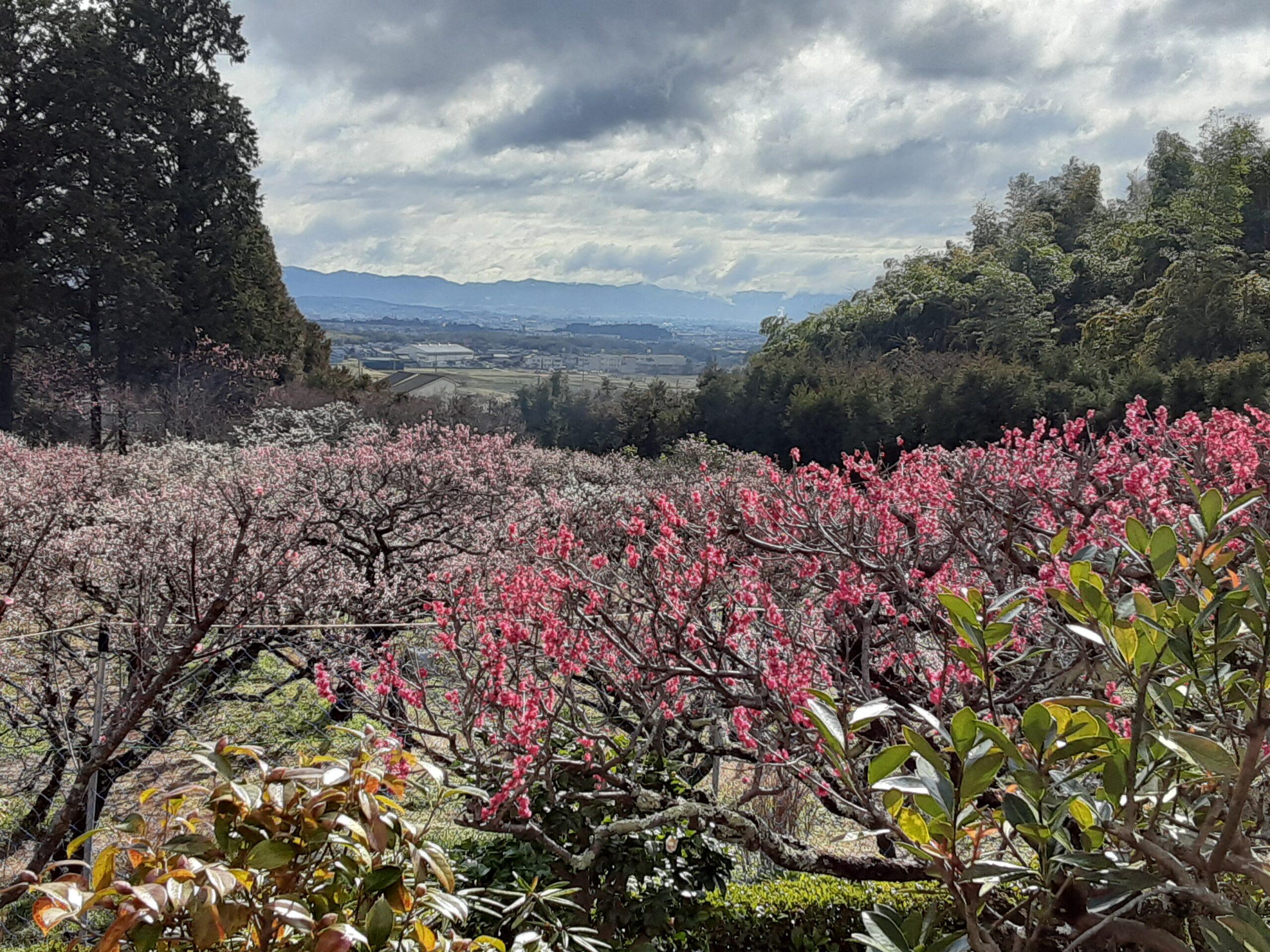 3月の写経は梅の花と雨上がりの苔石のおでむから始まりました🌱🌿🌸